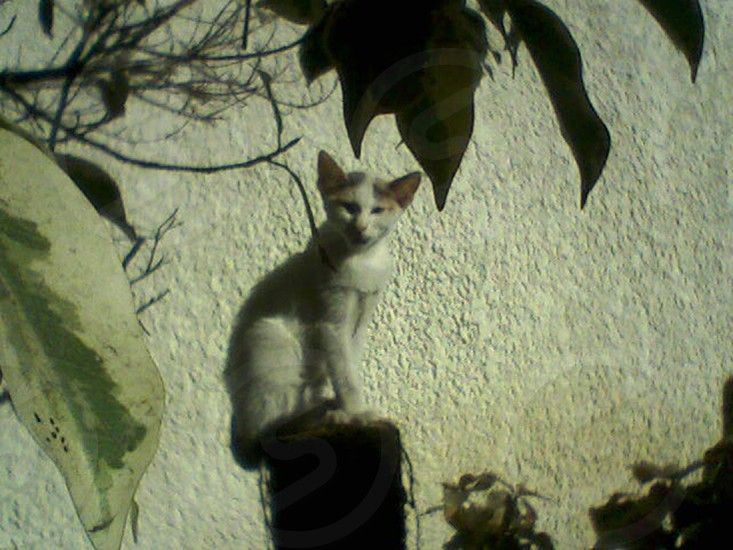 The Egyptian cat behind tree leaves photo