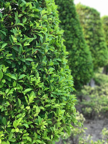 Photo by Gaid Phitthayakornsilp, , Banyan, tree, Ficus, annulata, leaf,  leaves, foliage, garden, green, park, outdoor, fence, fresh, wall,