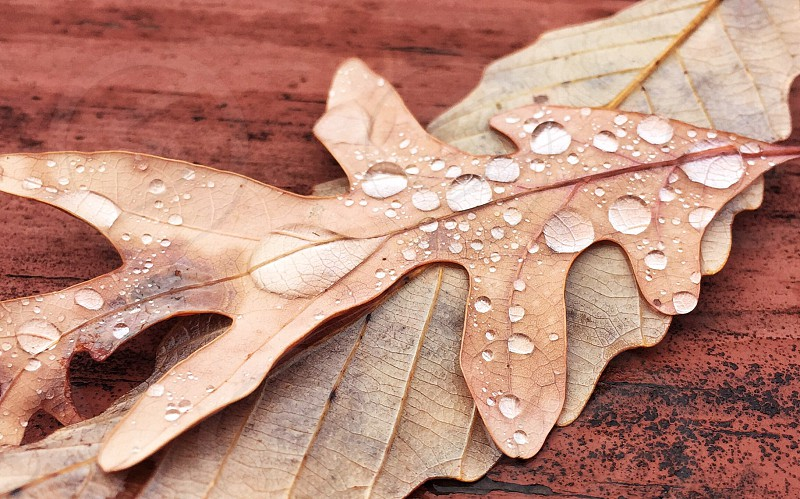 Fall leaves still life water droplets photo