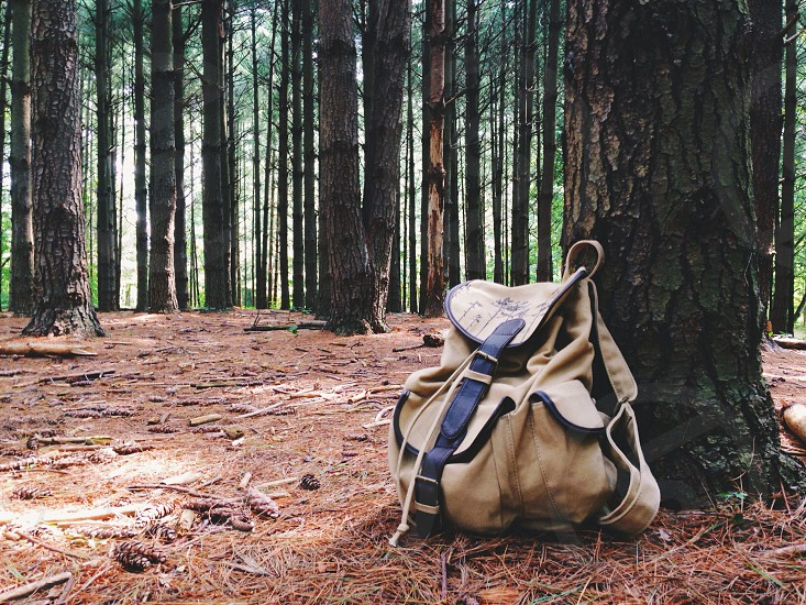 tan backpack laying against pine tree in wood s photo