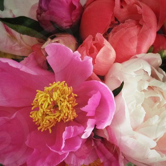 pink purple white floral arrangement photo