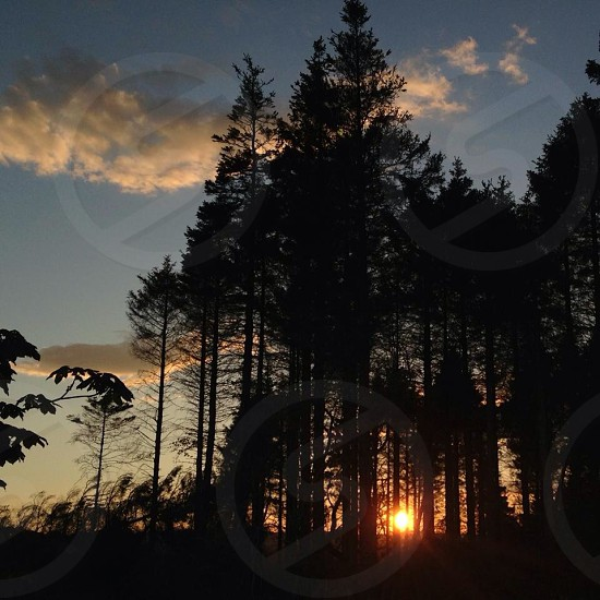 Sunset silhouette through the trees  photo