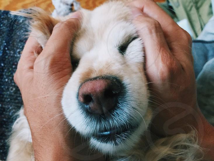 Squishy dog face photo