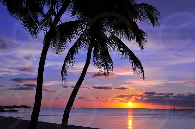 silhouette of 2 coconut trees by the seashore during sunrise photo