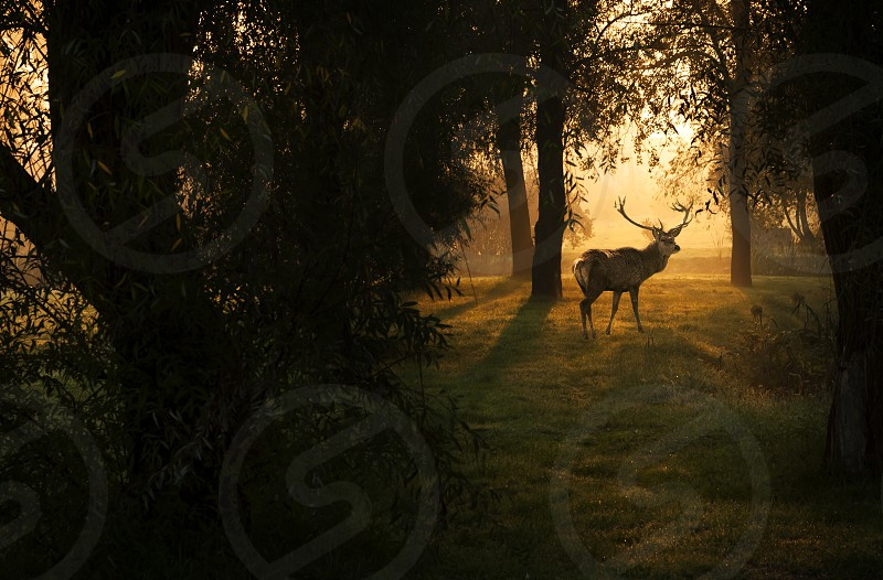 Deer in autumn forest photo