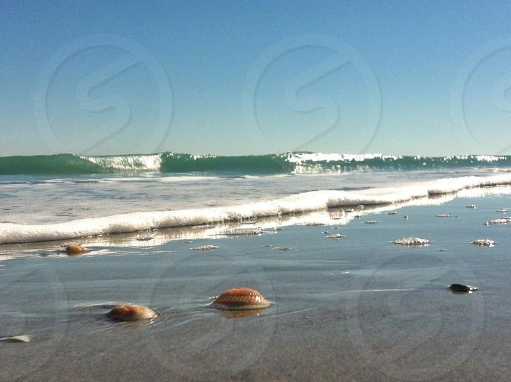 clams on sea shore photo