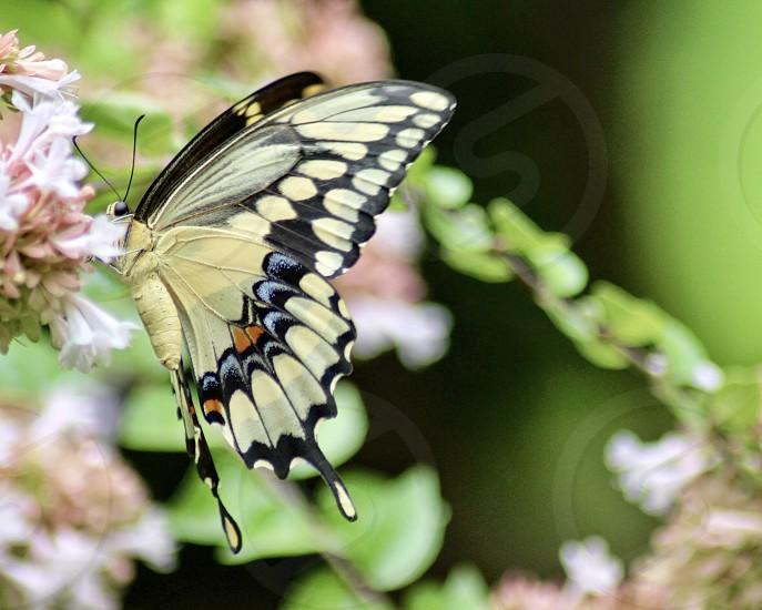 Flowers spring pink green butterflies  photo