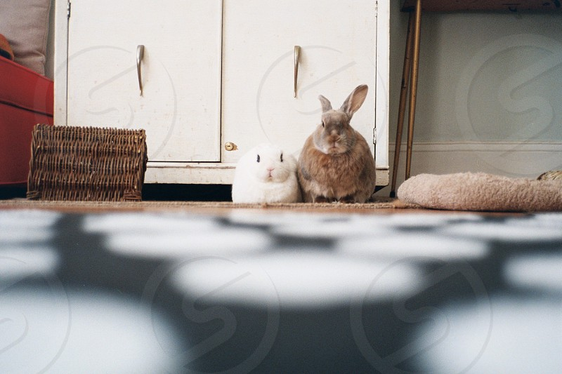 white and brown rabbit photo