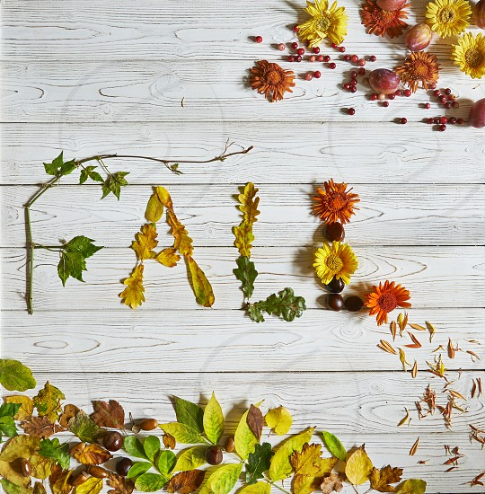 "Flat lay arrangement with word ""Fall"" made with leaves and flowers photo"
