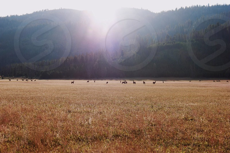 landscape photo of animal in a brown grass field near on forest during daytime photo