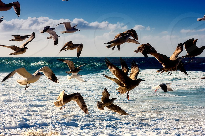seabirds flying over waves photo