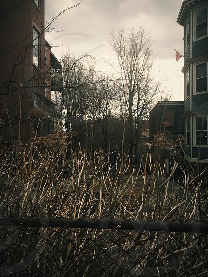 brown shrub branch photo