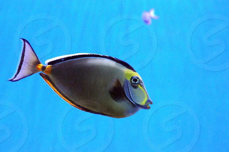 Fish underwater photo