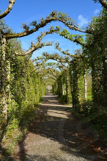 Ireland pathway trail photo
