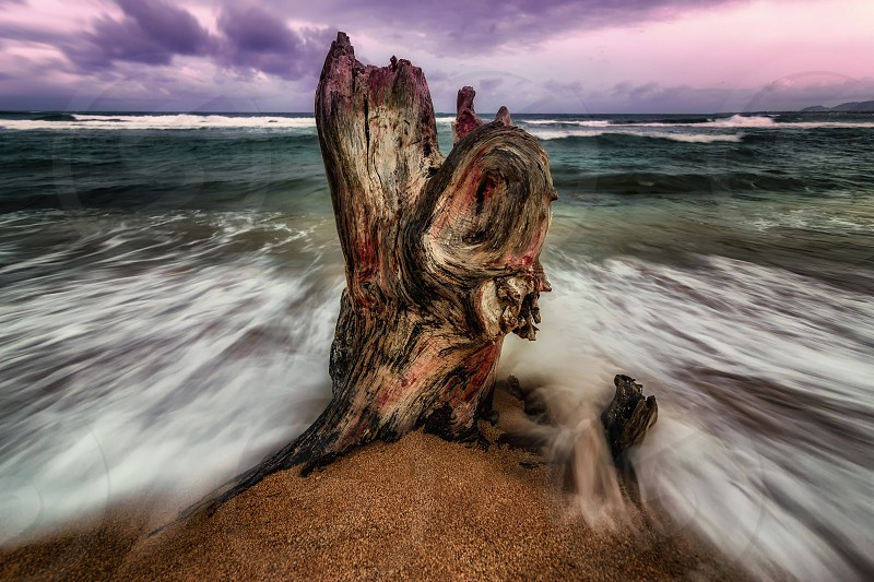 The remains of a tree stump are pounded by the Pacific Ocean at sunset. Kauai Hawaii. photo