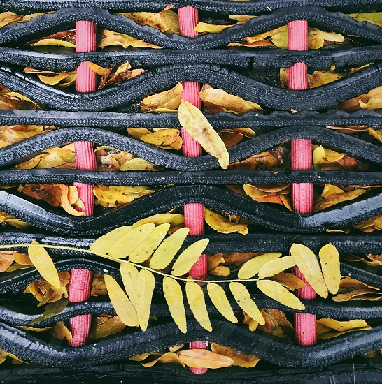 Color autumn fall texture yellow red pink rubber wavy leaves photo