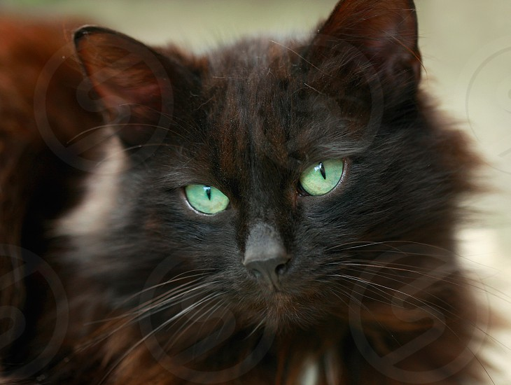green eyed cat photo