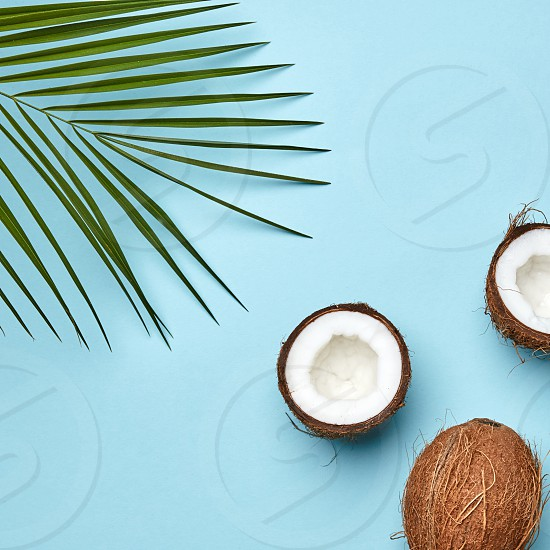 A coconut and palm green leaf on a blue background with copy space. The tropical nut. Flat lay photo