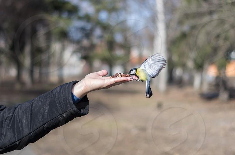 person in black jacket feeding yellow black and white bird photo