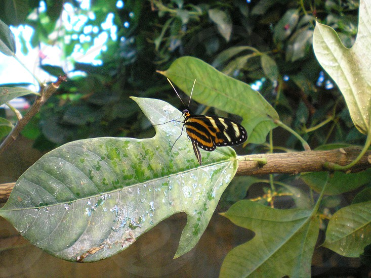 Orange and Black Butterfly at the Butterfly Garden in NY photo