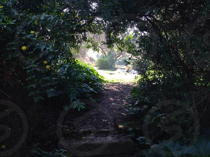 brown dirt trail under green trees during daytime photo
