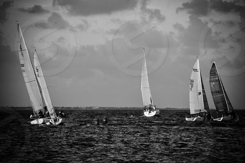 white sail boats photo