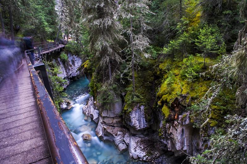 brown wooden bridge near green trees at daytime photo