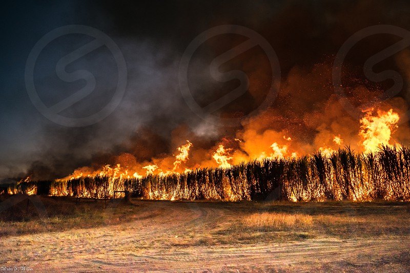 Cane fire in Ayr photo