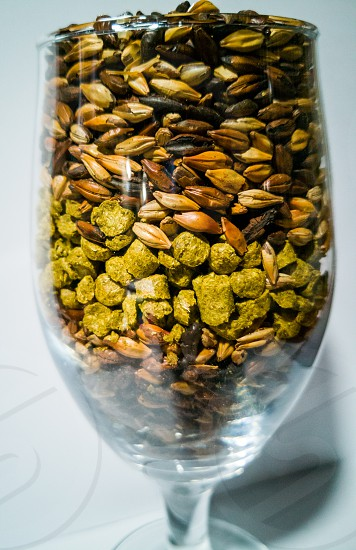 malt and barley for craft beer manufacturing inside a glass cup photo