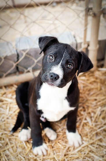 A puppy from the rescue shelter I took pictures at adorable little pup! photo