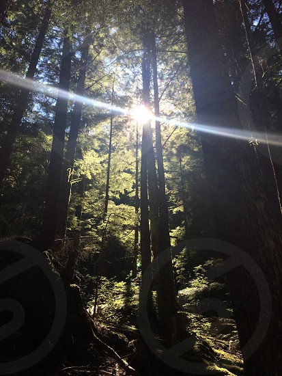Sunlight thru the trees forest hike photo