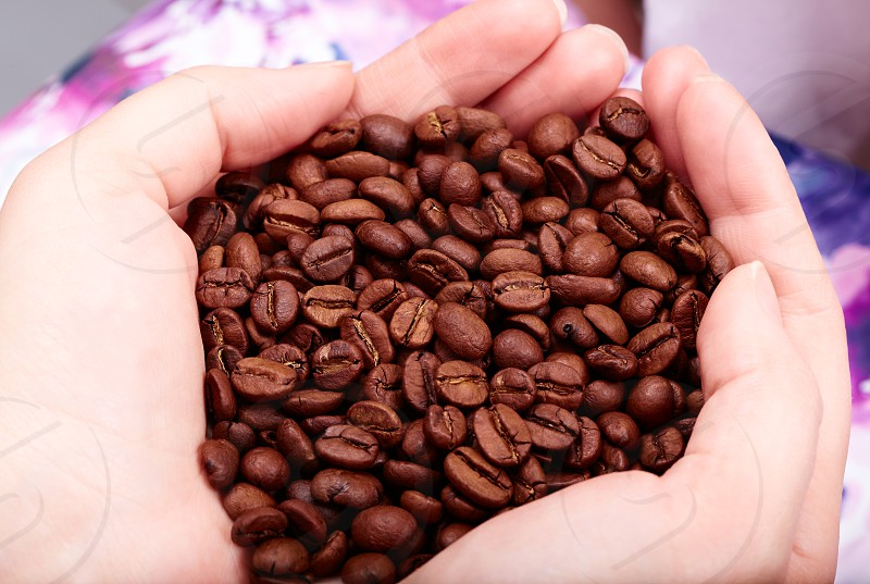 Coffee beans in hands. Natural morning light. photo