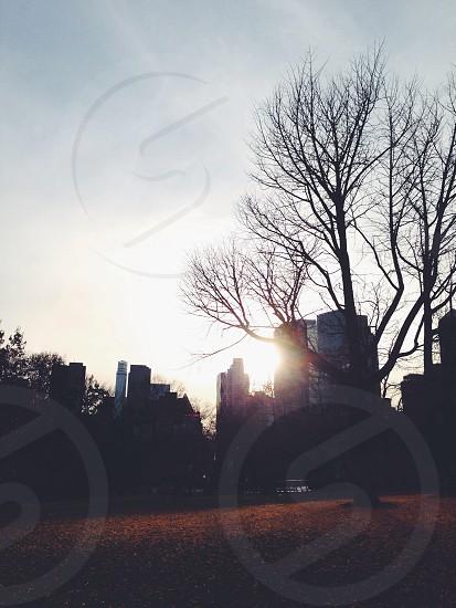 sky scraper photo