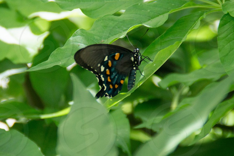 black with blue white and yellow print butterfly photo