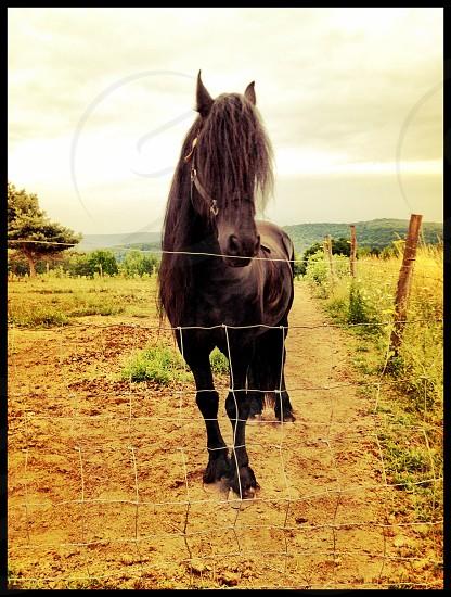 Horse black stallion farm meadow mysterious photo