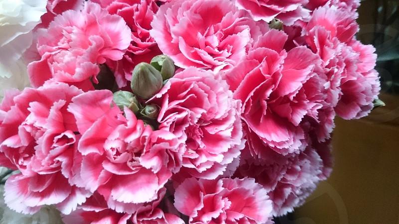 Pink - Flower photo