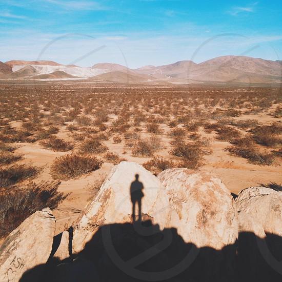 desert scrub brush photo