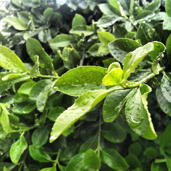 green leaf plant with water drops photo