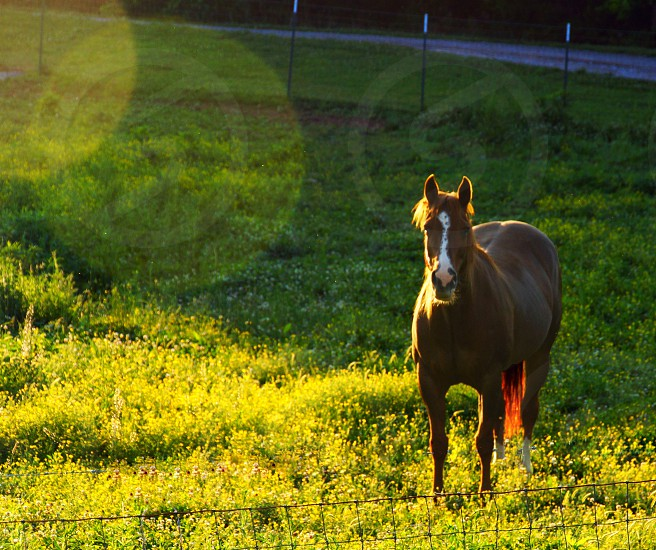 brown and white horse on green grassy field photo