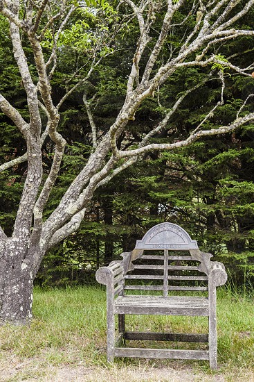 reflection calm peaceful resolution new meditation tree chair photo