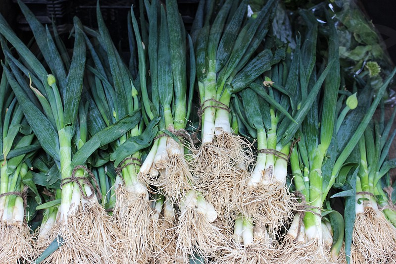 bundled spring onions in display photo