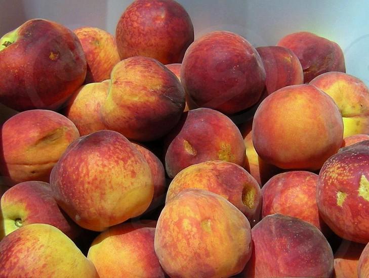 Fresh home grown hand picked peaches photo
