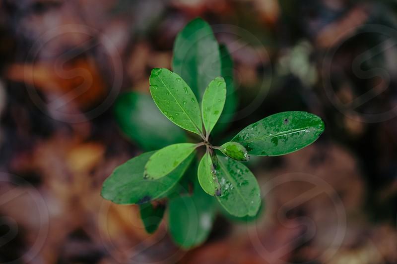 leaf new growth photo