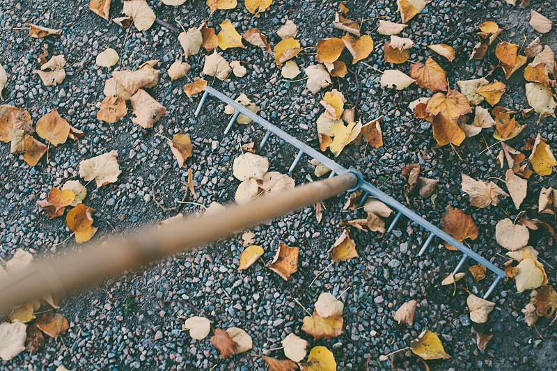 Rake tool gardening garden top perspective  top view  leaves fall autumn season  gardening garden photo
