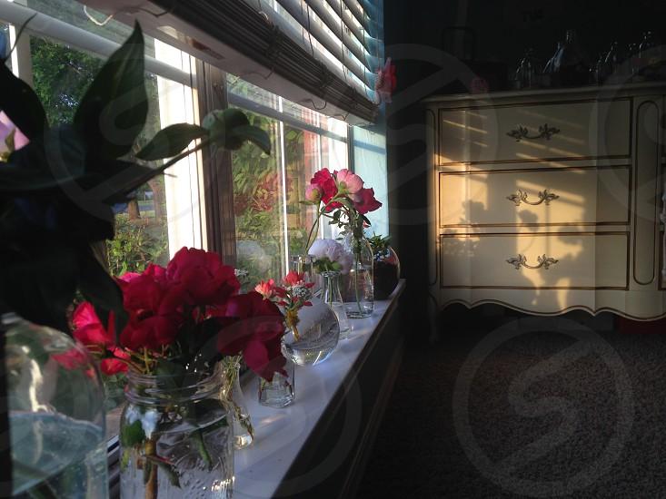 clear glass bottle with flower near window photo