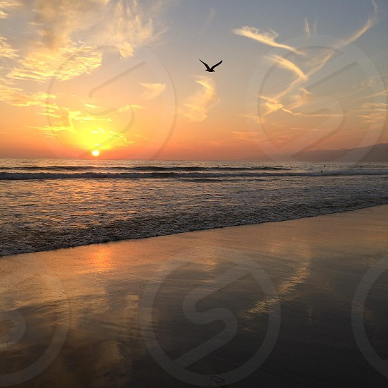 still life painting of bird flying above sea during sunset photo