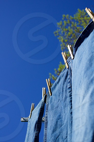Five Senses - Freshly laundered blue jeans hanging on a clothesline on a warm and breezy spring day against a brilliant blue sky and giant tree with early leaves in the background photo
