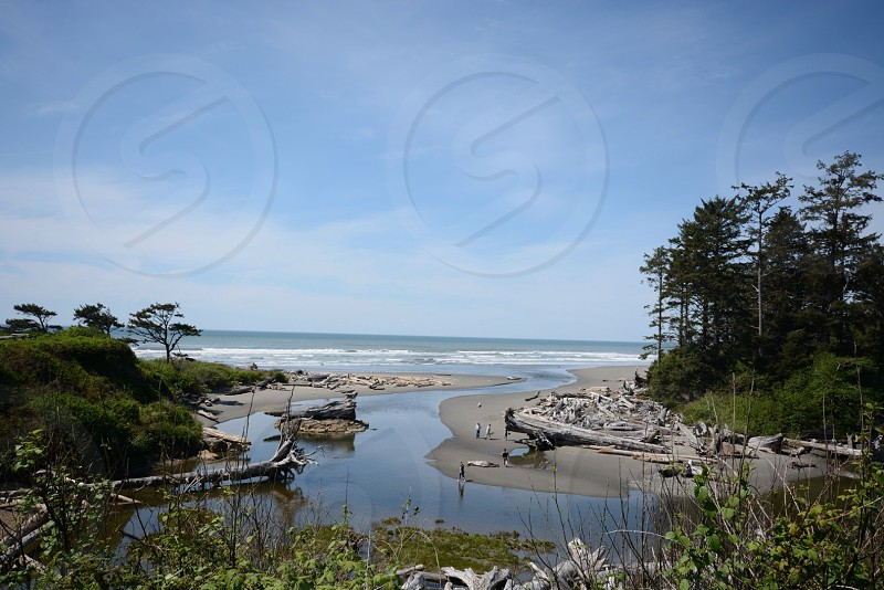 landscapes photography of body of water between trees photo