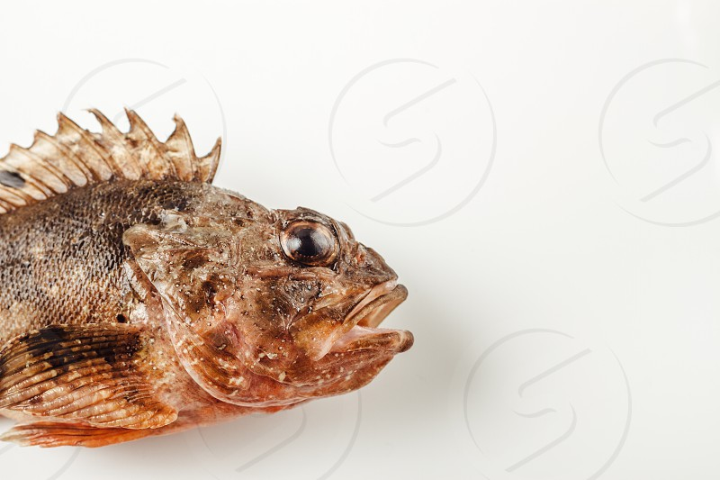 Raw fish on White background photo