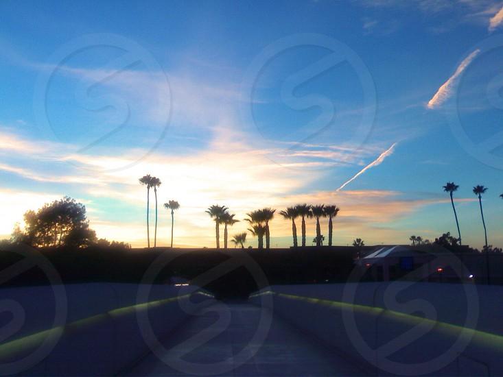 Orange County California. Sunset & Palm Trees.  photo